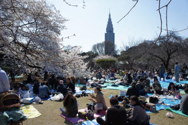 Während der Kirschblüte (Hanami) im Shinjuku Gyoen