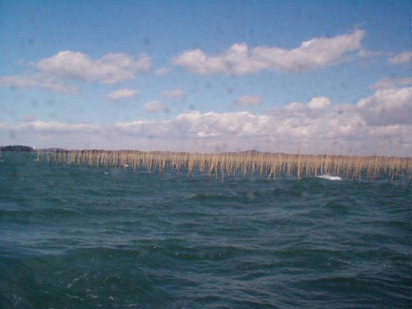 Die flache Bucht ist ideal für den Algenanbau