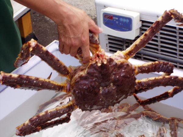 Krabben gelten als die Spezialität von Otaru