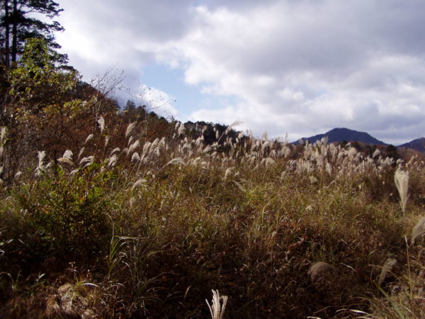 Klitzekleines Hochmoor nahe Kinugawa-Onsen