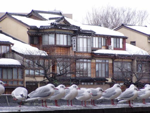 Möwenversammlung am Asano-Fluss mit Teehaus