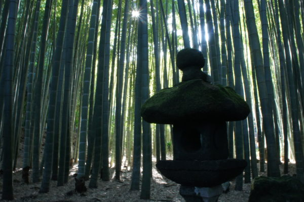 Bambuswald nahe der Stadt