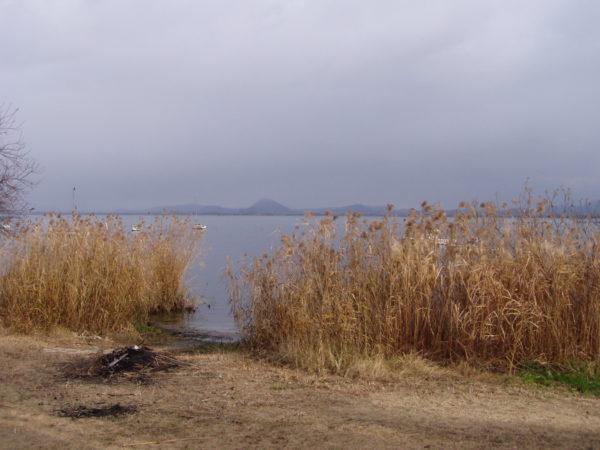 Schilf am Biwa-See bei Sakamoto