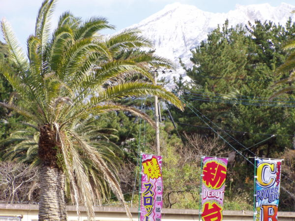 Palmen und schneebedeckte Berge - Sakurajima im Winter
