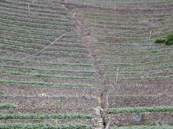 Terassenfelder in Yusu - sie werden weniger