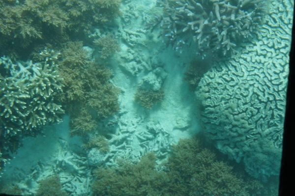 Korallen in der Kabira-Bucht