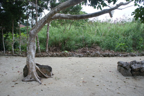 Baum vor einer der Utaki