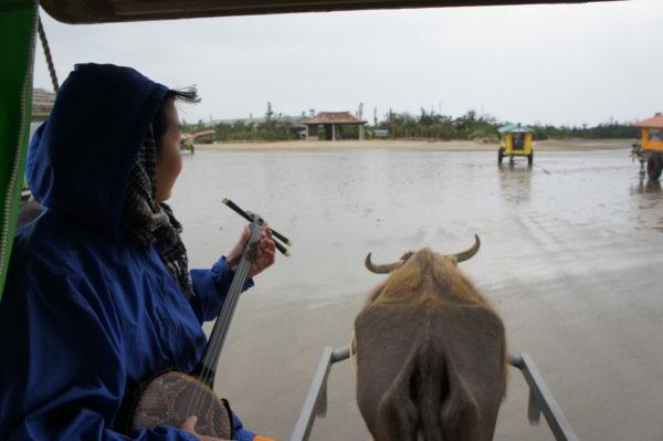 Hauptverkehrsmittel: Wasserbüffel