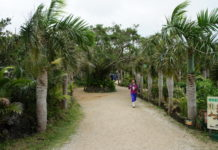 Botanischer Garten auf der Insel