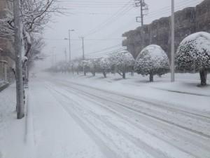 Tokyo und Umgebung mal ganz in Weiss