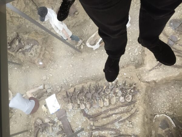 Im Naturgeschichtlichen Museum von Gunma