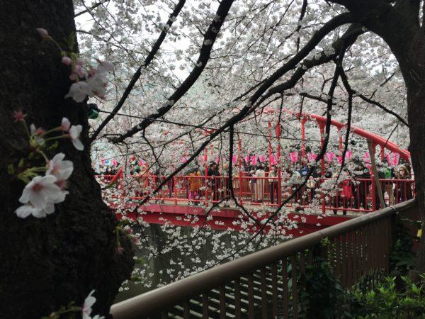 Die Naka-no-hashi-Brücke am Megurogawa während der Kirschblüte