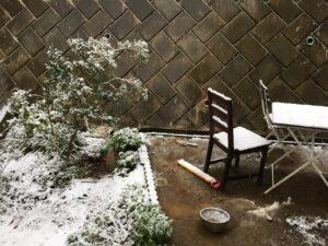 Unerhört: Schnee in Tokyo im November
