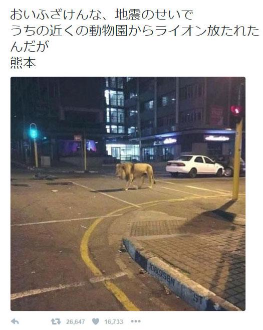 Gerüchte-Tweet: Angeblich ausgebrochener Löwe in Kumamoto