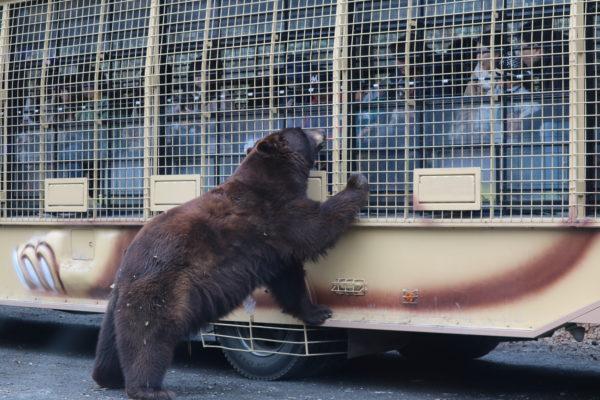 Bärenhunger im Safari-Park