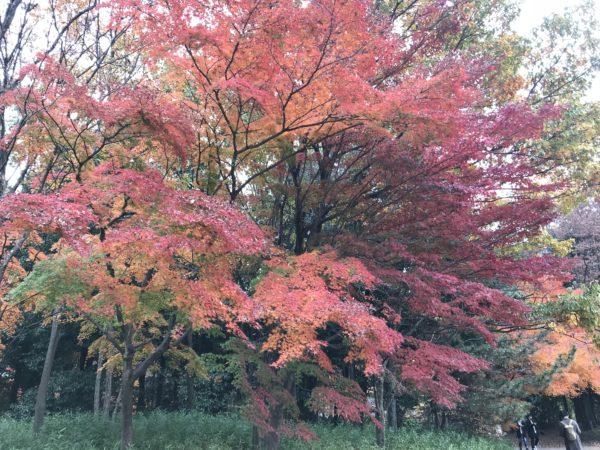 Herbstfarben im Tama Central Park