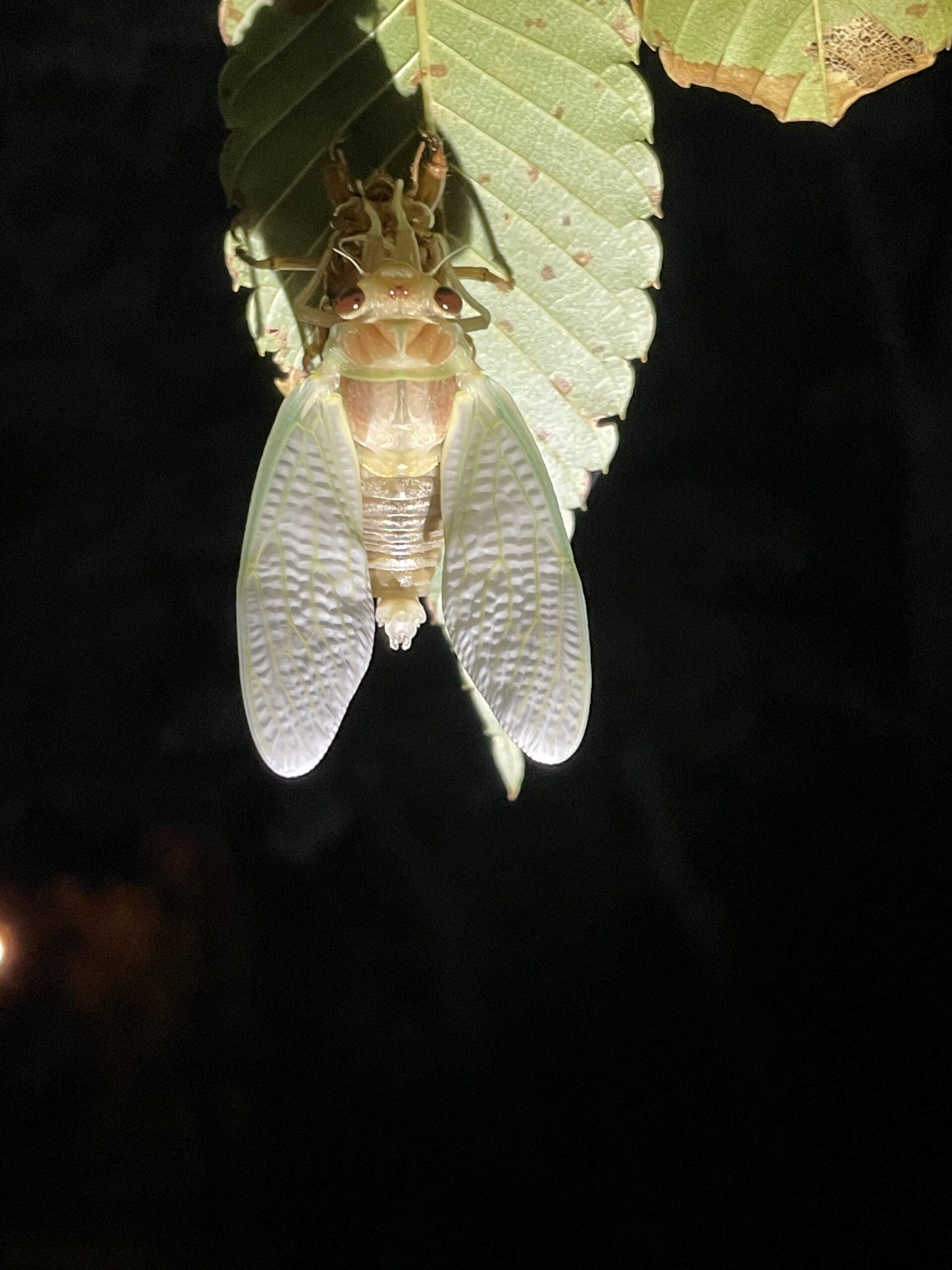 ... und die Flügel entfaltet...