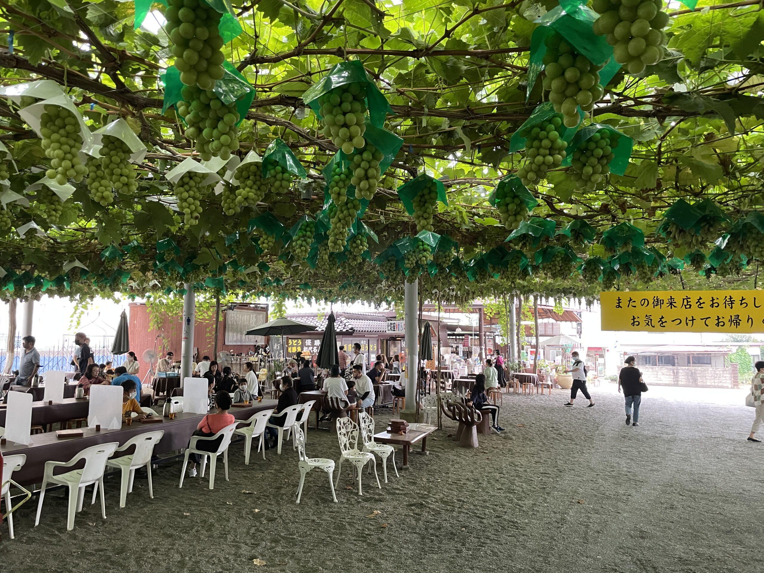 Freiluftrestaurant in Yamanashi, in dem man auch Trauben pflücken darf